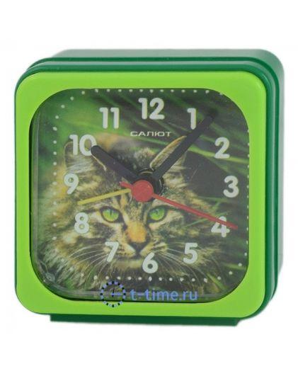 Салют 3Б-А3-520 кошка
